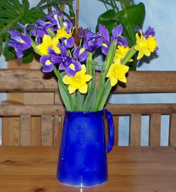 Iris, Narcissus
